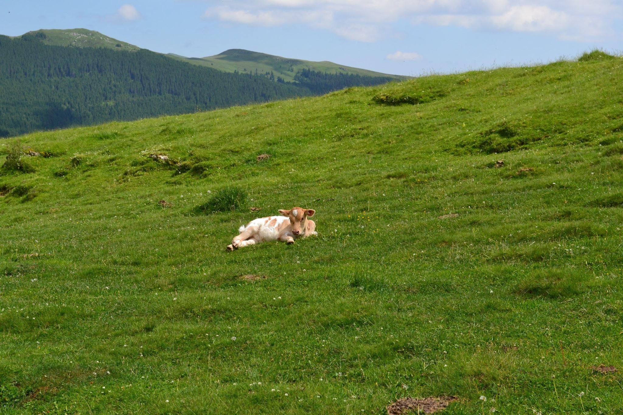 pajiste alpina - Cheile Horoabei - muntii Bucegi